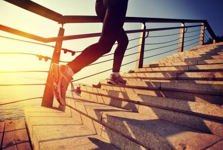 Training Courses d'Obstacles Longues Distances et Dénivelé