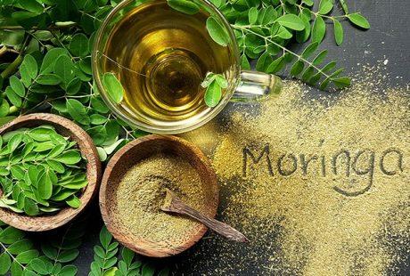 "Moringa: ""l'albero miracoloso"""