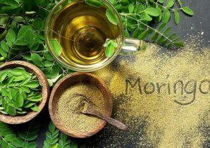 Moringa Bulk Powders
