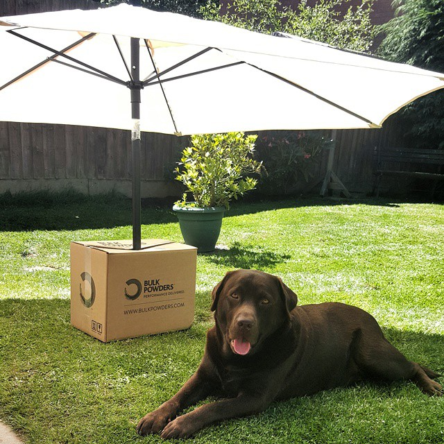 Dog Protecting its BULK POWDERS™ supplements